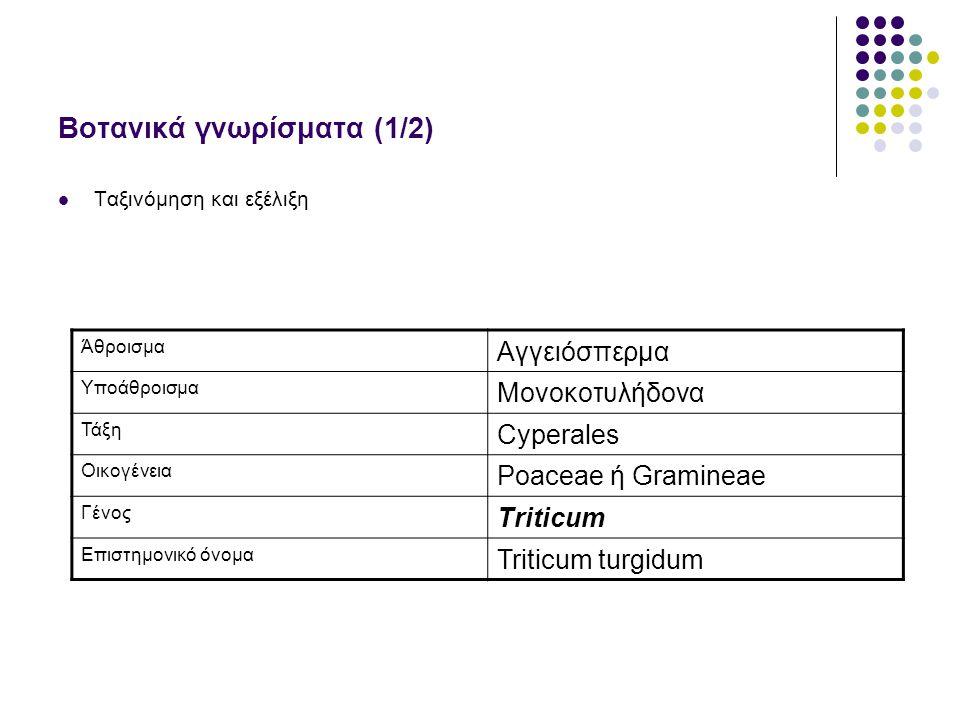 Βοτανικά γνωρίσματα (1/2) Ταξινόμηση και εξέλιξη Άθροισμα Αγγειόσπερμα Υποάθροισμα Μονοκοτυλήδονα Τάξη Cyperales Οικογένεια Poaceae ή Gramineae Γένος Triticum Επιστημονικό όνομα Triticum turgidum