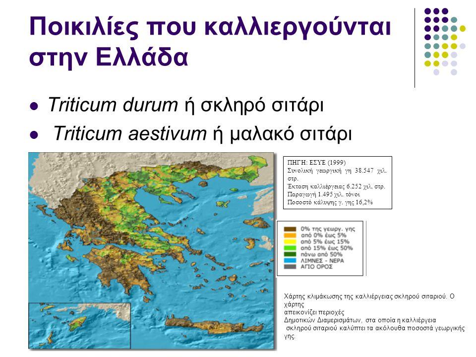 Ποικιλίες που καλλιεργούνται στην Ελλάδα Triticum durum ή σκληρό σιτάρι Triticum aestivum ή μαλακό σιτάρι ΠΗΓΗ: ΕΣΥΕ (1999) Συνολική γεωργική γη 38.547 χιλ.