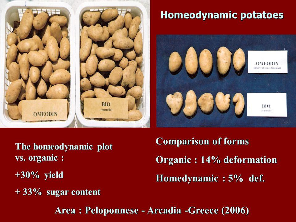 Homeodynamic potatoes Homeodynamic potatoes The homeodynamic plot vs. organic : +30% yield + 33% sugar content Comparison of forms Organic : 14% defor