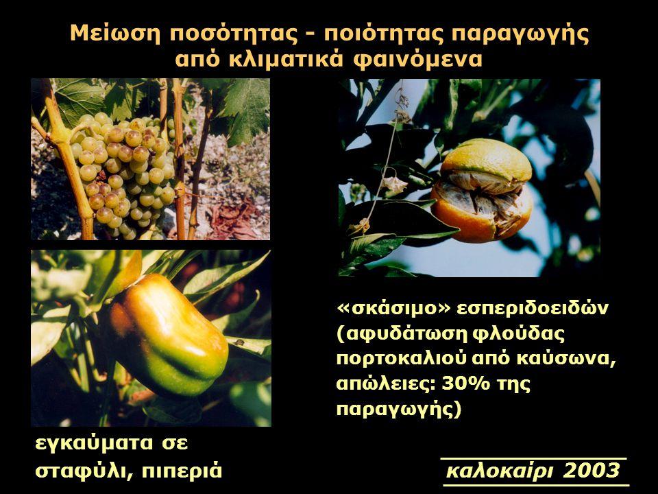 Μείωση ποσότητας - ποιότητας παραγωγής από κλιματικά φαινόμενα «σκάσιμο» εσπεριδοειδών (αφυδάτωση φλούδας πορτοκαλιού από καύσωνα, απώλειες: 30% της π