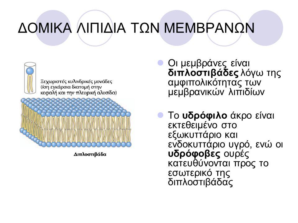 ΔΟΜΙΚΑ ΛΙΠΙΔΙΑ ΤΩΝ ΜΕΜΒΡΑΝΩΝ Οι μεμβράνες είναι διπλοστιβάδες λόγω της αμφιπολικότητας των μεμβρανικών λιπιδίων Το υδρόφιλο άκρο είναι εκτεθειμένο στο