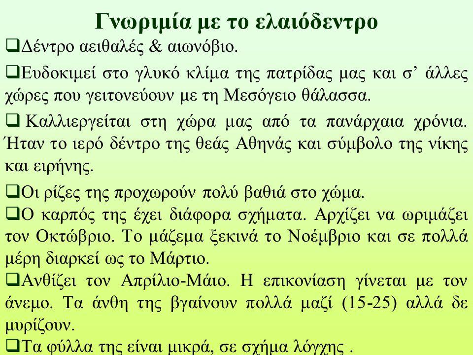 ΟΜΑΔΑ 5 ΦΡΟΥΤΑ ΛΑΧΑΝΙΚΑ