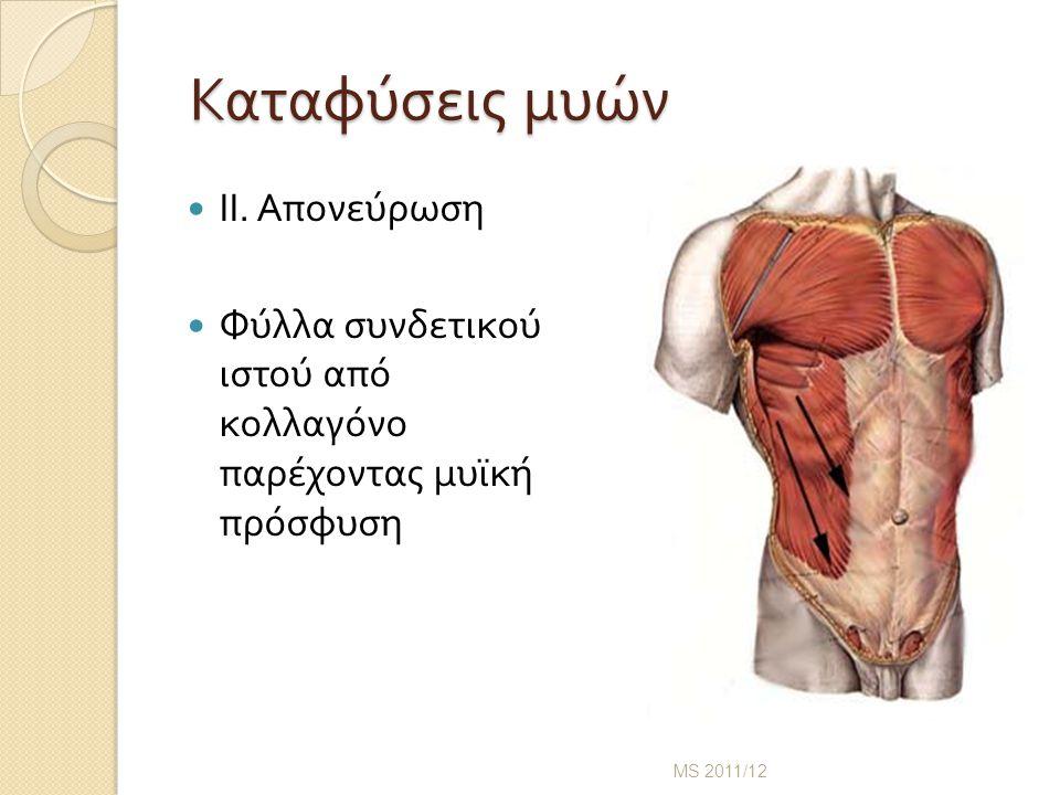 Καταφύσεις μυών Καταφύσεις μυών ΙΙ.