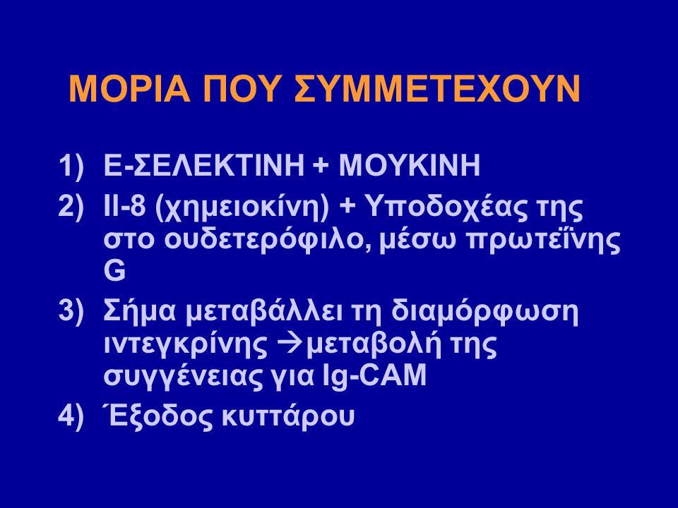 ΜΟΡΙΑ ΠΟΥ ΣΥΜΜΕΤΕΧΟΥΝ 1)Ε-ΣΕΛΕΚΤΙΝΗ + ΜΟΥΚΙΝΗ 2)Il-8 (χημειοκίνη) + Υποδοχέας της στο ουδετερόφιλο, μέσω πρωτεΐνης G 3)Σήμα μεταβάλλει τη διαμόρφωση ιντεγκρίνης  μεταβολή της συγγένειας για Ig-CAM 4)Έξοδος κυττάρου