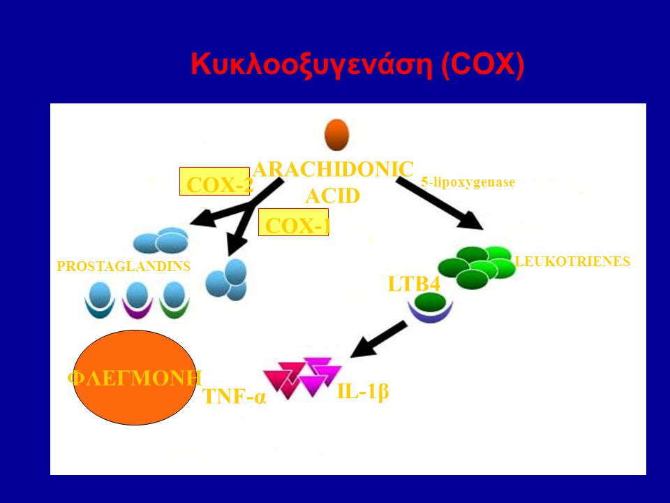 Κυκλοοξυγενάση (COX) ARACHIDONIC ACID COX-2 COX-1 PROSTAGLANDINS 5-lipoxygenase LEUKOTRIENES LTB4 TNF-α IL-1β ΦΛΕΓΜΟΝΗ