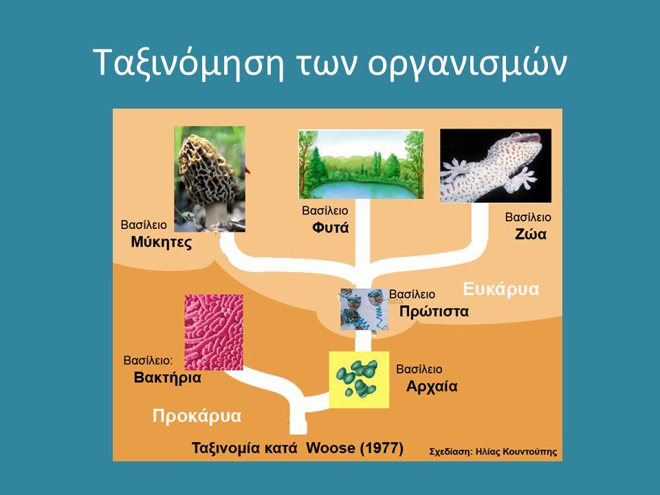 4 Μορφολογική ταξινόμηση των βακτηρίων Τα βακτήρια διακρίνονται σε: α.