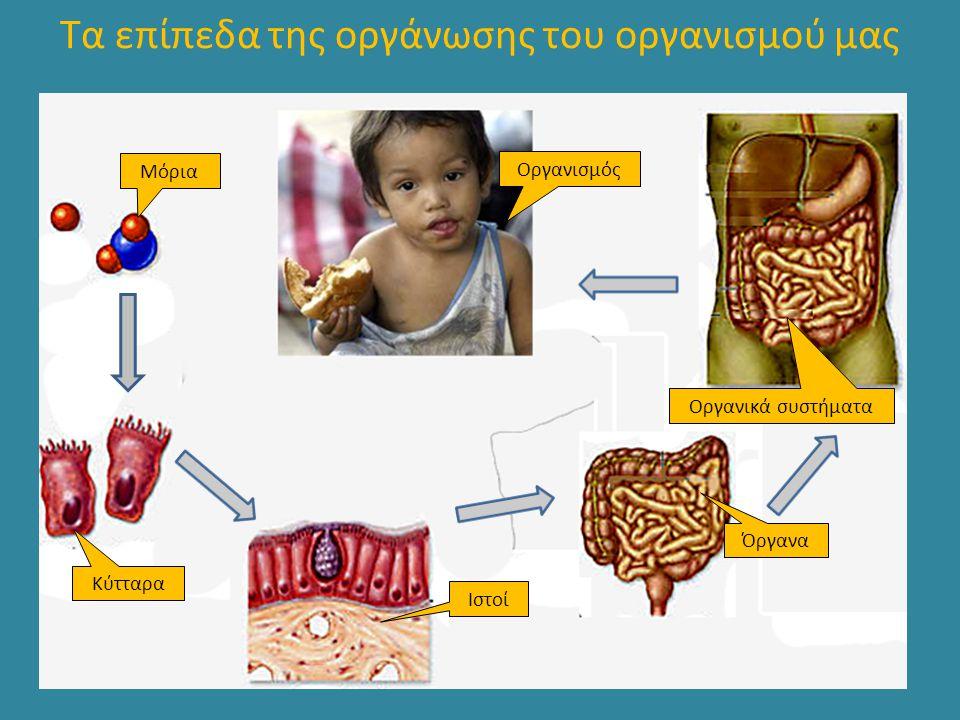 Το δέρμα αισθητήριο όργανο της αφής, της πίεσης, του πόνου, της θερμοκρασίας