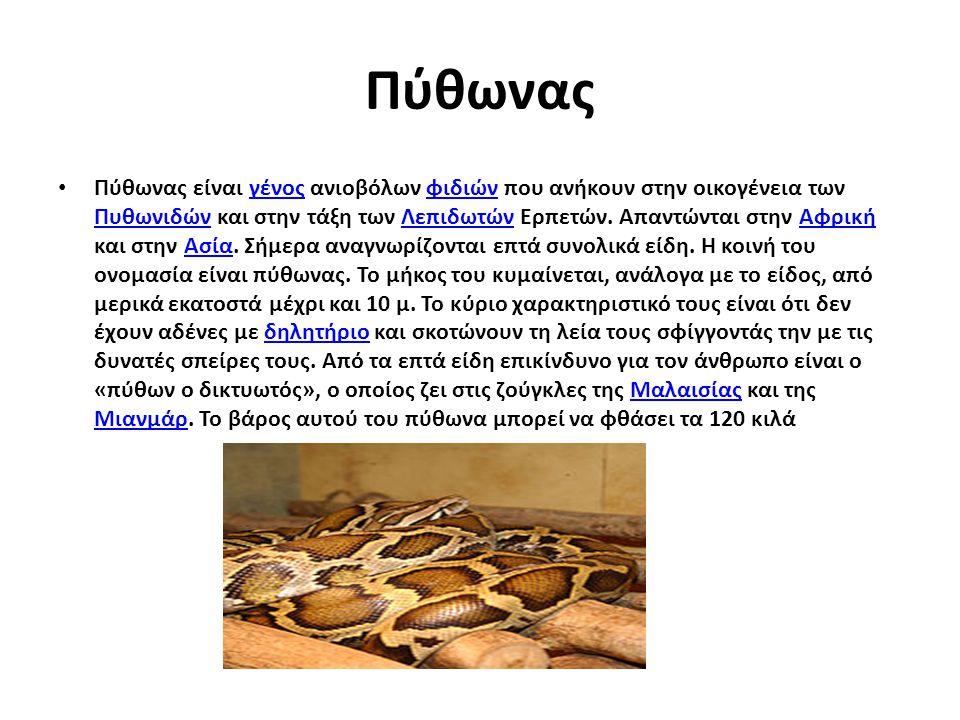 Πύθωνας Πύθωνας είναι γένος ανιοβόλων φιδιών που ανήκουν στην οικογένεια των Πυθωνιδών και στην τάξη των Λεπιδωτών Ερπετών. Απαντώνται στην Αφρική και