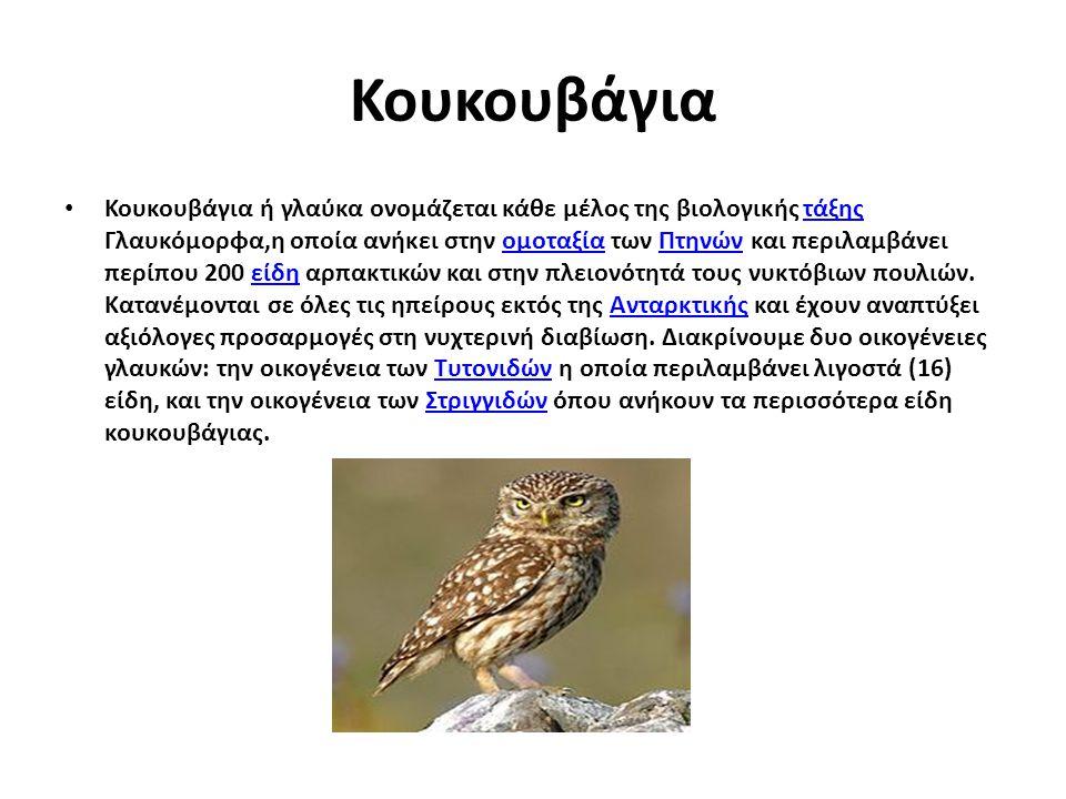 Κουκουβάγια Κουκουβάγια ή γλαύκα ονομάζεται κάθε μέλος της βιολογικής τάξης Γλαυκόμορφα,η οποία ανήκει στην ομοταξία των Πτηνών και περιλαμβάνει περίπ