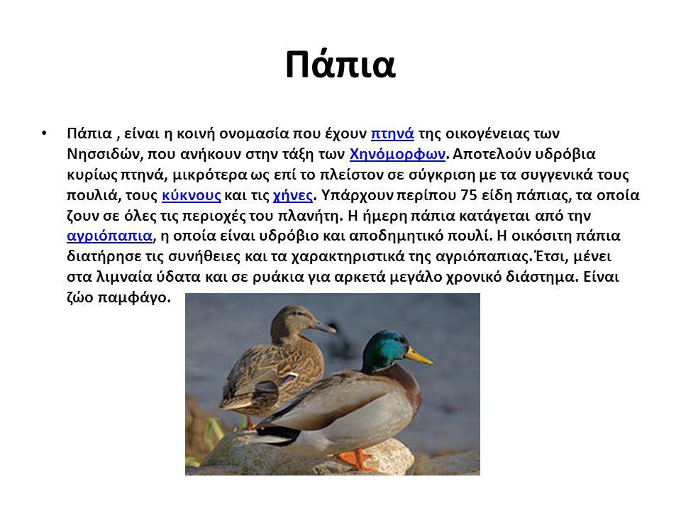 Πάπια Πάπια, είναι η κοινή ονομασία που έχουν πτηνά της οικογένειας των Νησσιδών, που ανήκουν στην τάξη των Χηνόμορφων. Αποτελούν υδρόβια κυρίως πτηνά
