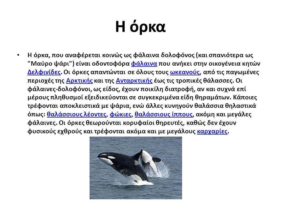 Η όρκα Η όρκα, που αναφέρεται κοινώς ως φάλαινα δολοφόνος (και σπανιότερα ως