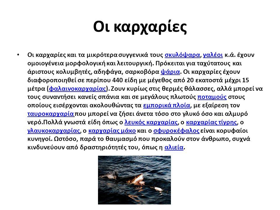 Οι καρχαρίες Οι καρχαρίες και τα μικρότερα συγγενικά τους σκυλόψαρα, γαλέοι κ.ά. έχουν ομοιογένεια μορφολογική και λειτουργική. Πρόκειται για ταχύτατο
