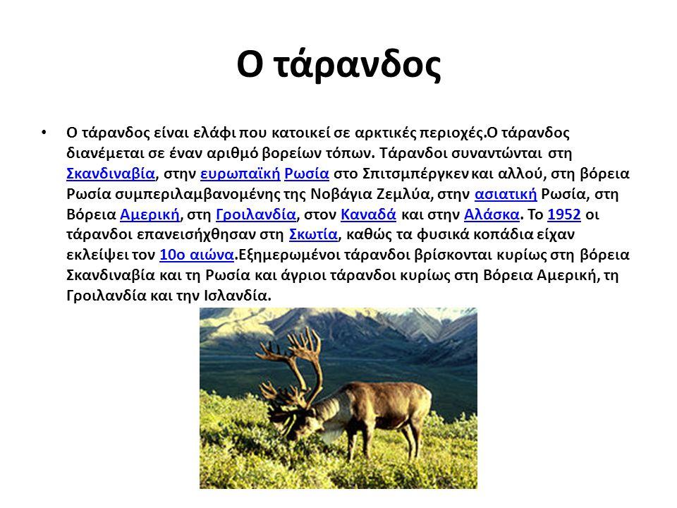 Ο τάρανδος Ο τάρανδος είναι ελάφι που κατοικεί σε αρκτικές περιοχές.Ο τάρανδος διανέμεται σε έναν αριθμό βορείων τόπων. Τάρανδοι συναντώνται στη Σκανδ