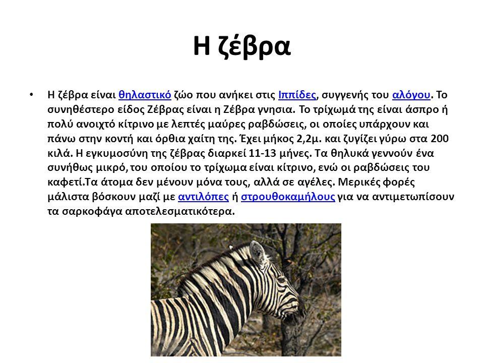Η ζέβρα Η ζέβρα είναι θηλαστικό ζώο που ανήκει στις Ιππίδες, συγγενής του αλόγου. Το συνηθέστερο είδος Ζέβρας είναι η Ζέβρα γνησια. Το τρίχωμά της είν
