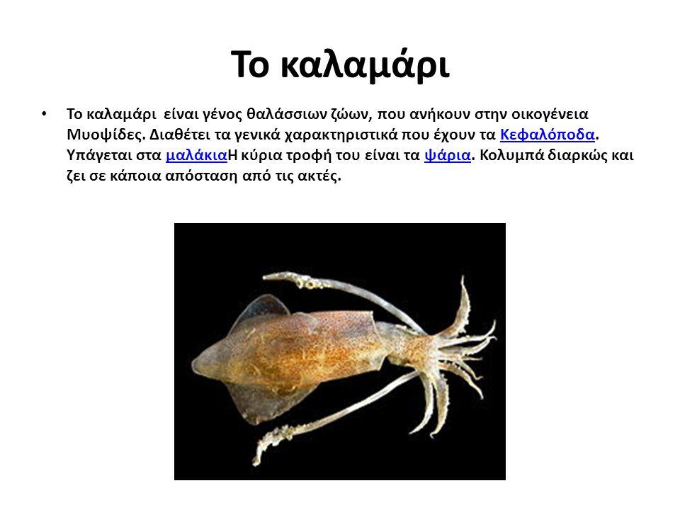Το καλαμάρι Το καλαμάρι είναι γένος θαλάσσιων ζώων, που ανήκουν στην οικογένεια Μυοψίδες. Διαθέτει τα γενικά χαρακτηριστικά που έχουν τα Κεφαλόποδα. Υ