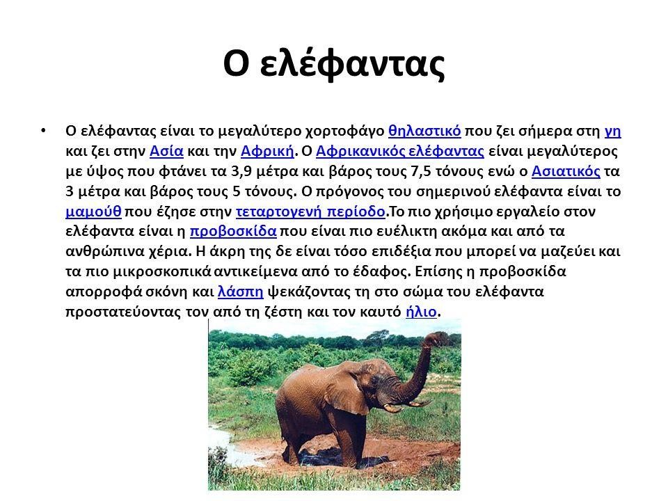 Ο ελέφαντας Ο ελέφαντας είναι το μεγαλύτερο χορτοφάγο θηλαστικό που ζει σήμερα στη γη και ζει στην Ασία και την Αφρική. Ο Αφρικανικός ελέφαντας είναι