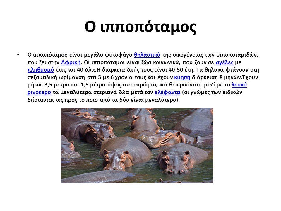 Ο ιπποπόταμος Ο ιπποπόταμος είναι μεγάλο φυτοφάγο θηλαστικό της οικογένειας των ιπποποταμιδών, που ζει στην Αφρική. Οι ιπποπόταμοι είναι ζώα κοινωνικά