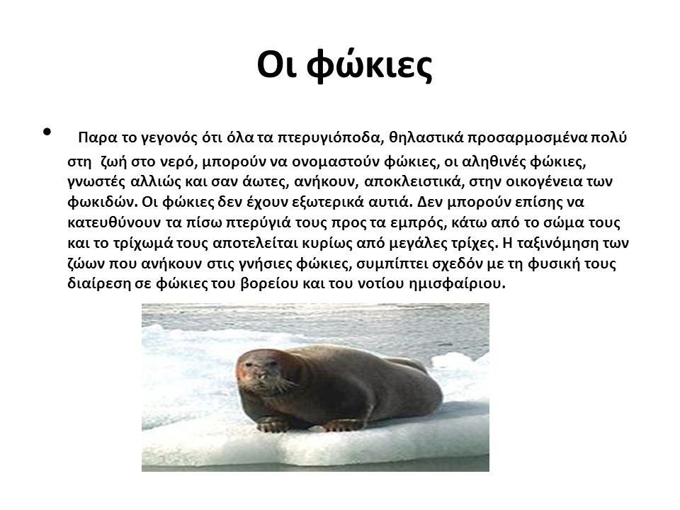 Οι φώκιες Παρα το γεγονός ότι όλα τα πτερυγιόποδα, θηλαστικά προσαρμοσμένα πολύ στη ζωή στο νερό, μπορούν να ονομαστούν φώκιες, οι αληθινές φώκιες, γν