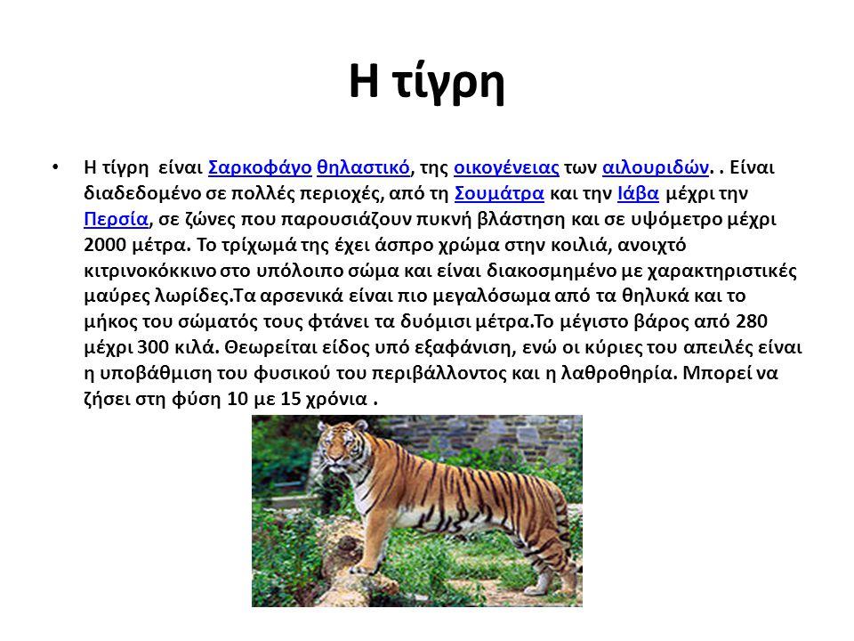 Η τίγρη Η τίγρη είναι Σαρκοφάγο θηλαστικό, της οικογένειας των αιλουριδών.. Είναι διαδεδομένο σε πολλές περιοχές, από τη Σουμάτρα και την Ιάβα μέχρι τ