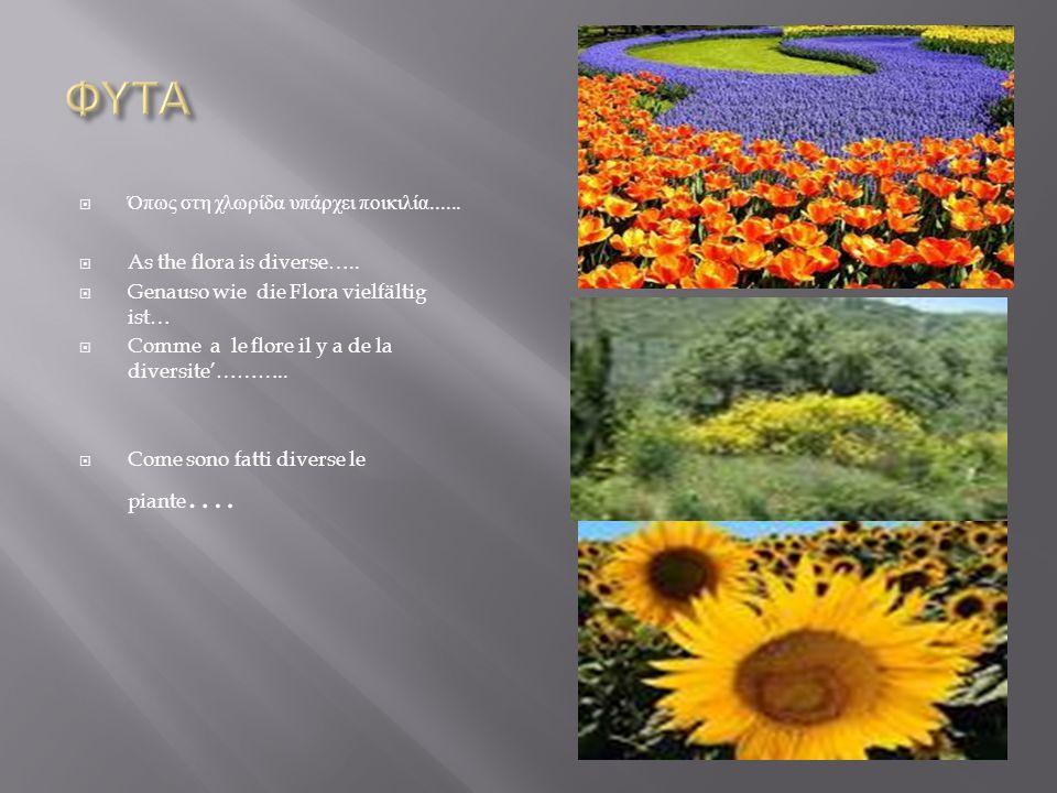  Όπως στη χλωρίδα υπάρχει ποικιλία......  As the flora is diverse…..