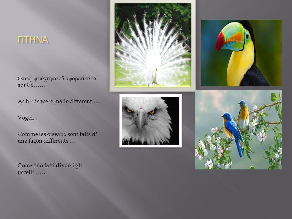 ΠΤΗΝΑ Όπως φτιάχτηκαν διαφορετικά τα πουλιά ……. As birds were made different…..