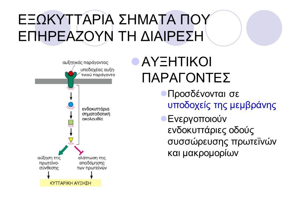 ΕΞΩΚΥΤΤΑΡΙΑ ΣΗΜΑΤΑ ΠΟΥ ΕΠΗΡΕΑΖΟΥΝ ΤΗ ΔΙΑΙΡΕΣΗ ΑΥΞΗΤΙΚΟΙ ΠΑΡΑΓΟΝΤΕΣ Προσδένονται σε υποδοχείς της μεμβράνης Ενεργοποιούν ενδοκυττάριες οδούς συσσώρευση