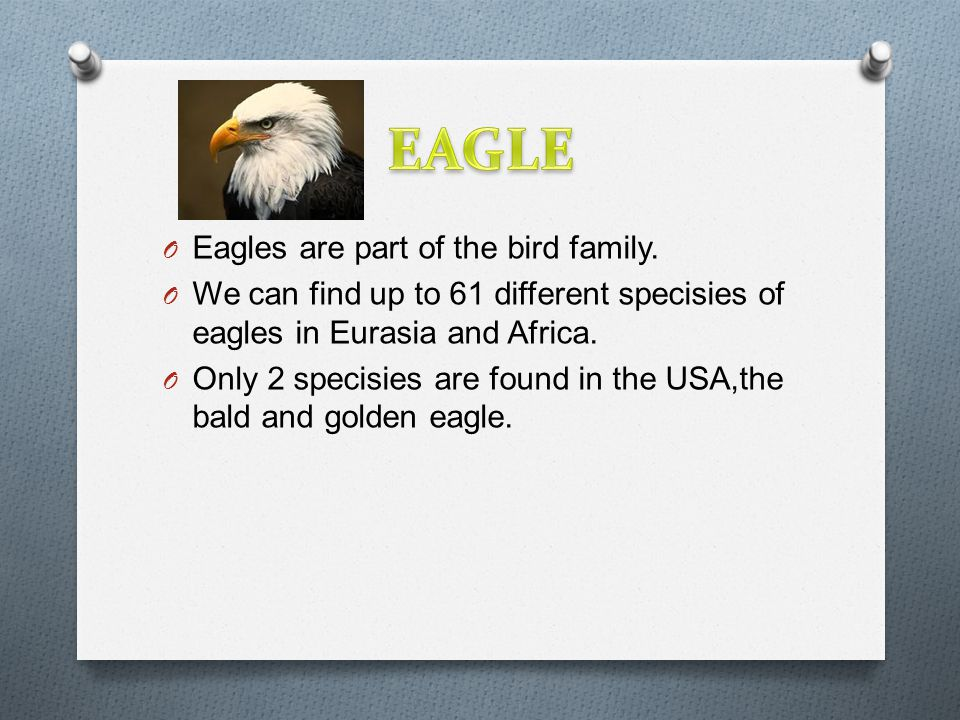 O Eagles are part of the bird family.