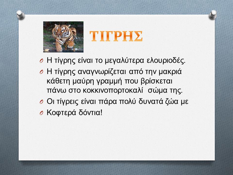 O Η τίγρης είναι το μεγαλύτερα ελουριοδές.