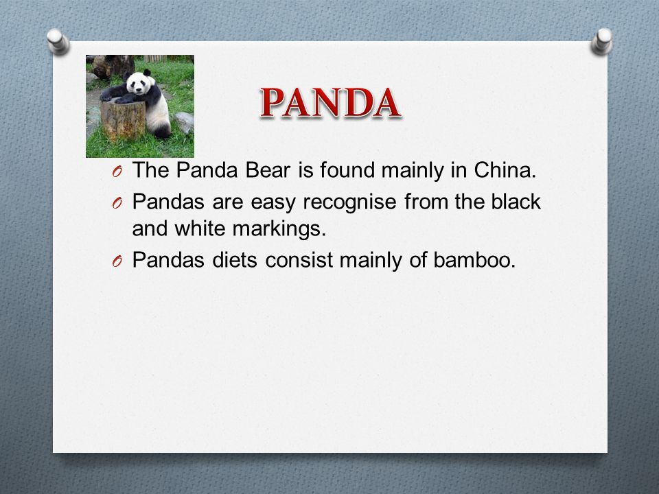 O The Panda Bear is found mainly in China.