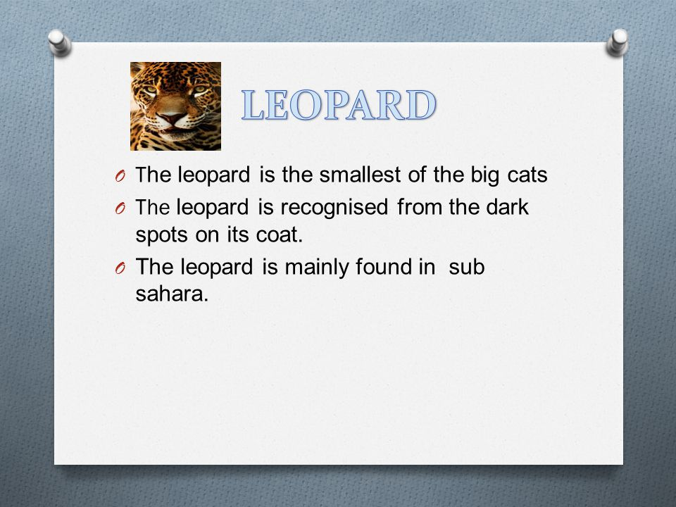 O The leopard is the smallest of the big cats O The leopard is recognised from the dark spots on its coat.