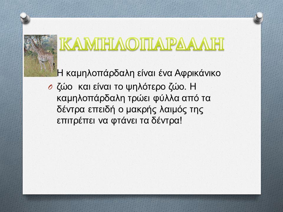O Η καμηλοπάρδαλη είναι ένα Αφρικάνικο O ζώο και είναι το ψηλότερο ζώο.