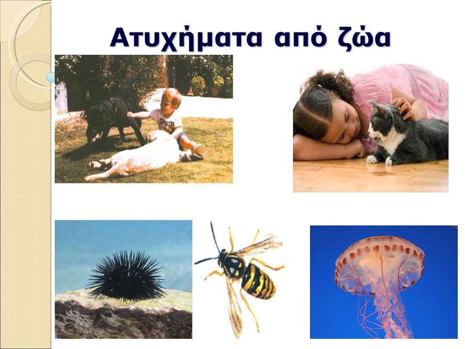Ατυχήματα από ζώα