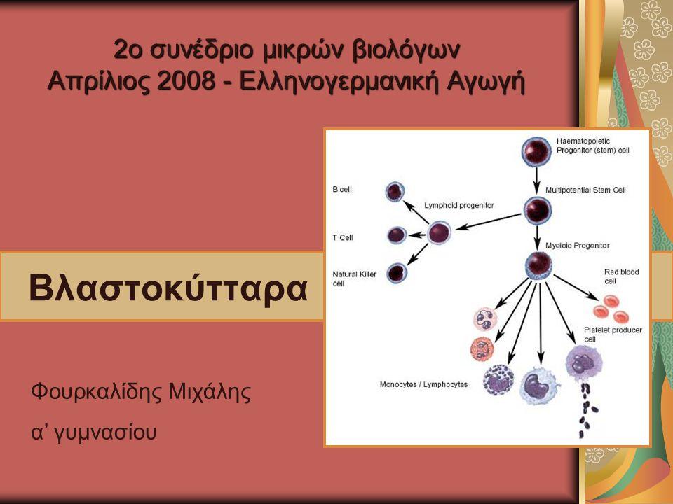 Βλαστοκύτταρα Φουρκαλίδης Μιχάλης α' γυμνασίου 2ο συνέδριο μικρών βιολόγων Απρίλιος 2008 - Ελληνογερμανική Αγωγή