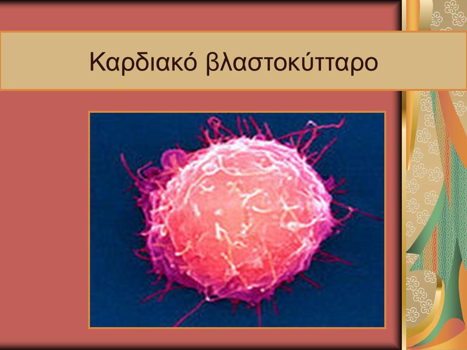 Καρδιακό βλαστοκύτταρο