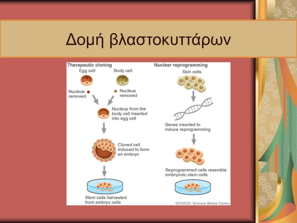 Δομή βλαστοκυττάρων
