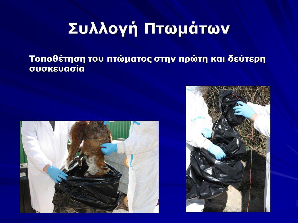 Συλλογή Πτωμάτων Τοποθέτηση του πτώματος στην πρώτη και δεύτερη συσκευασία