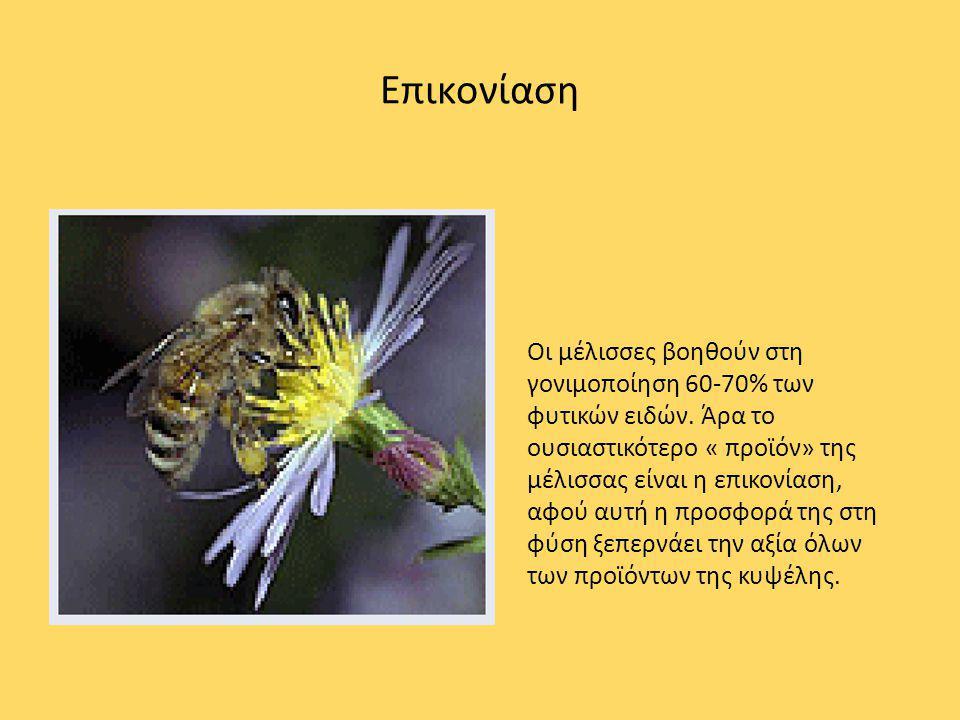 Επικονίαση Οι μέλισσες βοηθούν στη γονιμοποίηση 60-70% των φυτικών ειδών. Άρα το ουσιαστικότερο « προϊόν» της μέλισσας είναι η επικονίαση, αφού αυτή η