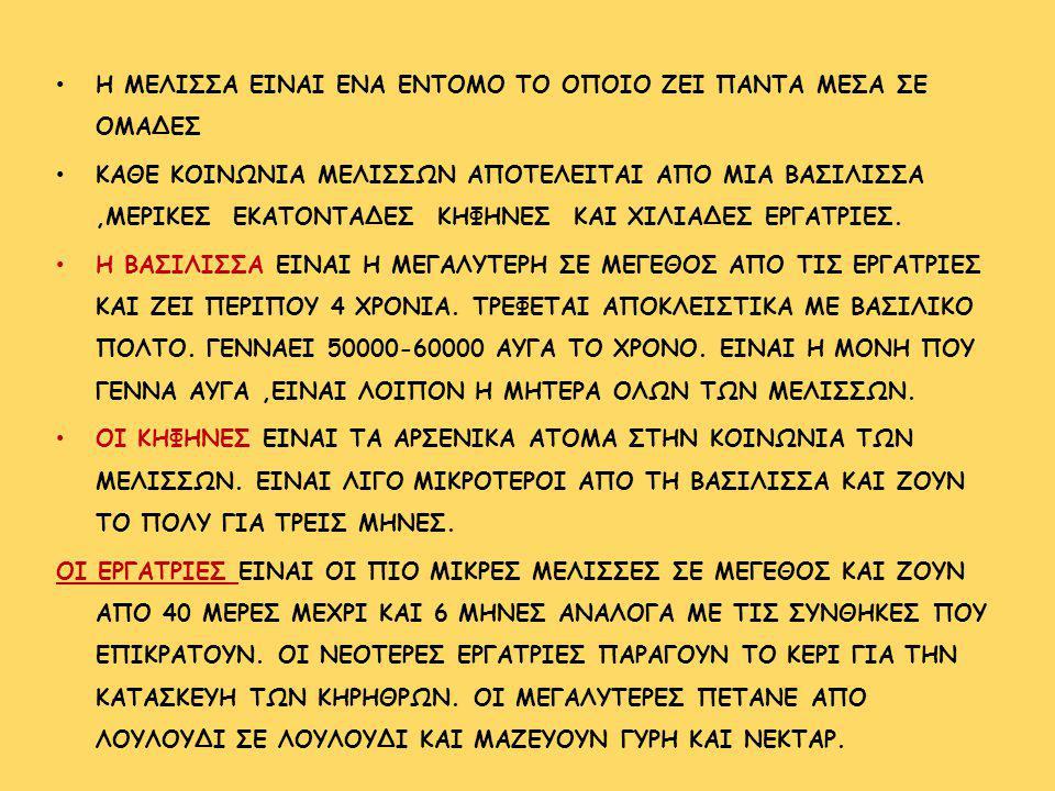 Η ΜΕΛΙΣΣΑ ΕΙΝΑΙ ΕΝΑ ΕΝΤΟΜΟ ΤΟ ΟΠΟΙΟ ΖΕΙ ΠΑΝΤΑ ΜΕΣΑ ΣΕ ΟΜΑΔΕΣ ΚΑΘΕ ΚΟΙΝΩΝΙΑ ΜΕΛΙΣΣΩΝ ΑΠΟΤΕΛΕΙΤΑΙ ΑΠΟ ΜΙΑ ΒΑΣΙΛΙΣΣΑ,ΜΕΡΙΚΕΣ ΕΚΑΤΟΝΤΑΔΕΣ ΚΗΦΗΝΕΣ ΚΑΙ ΧΙΛΙ