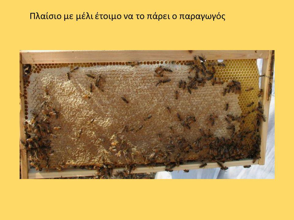Πλαίσιο με μέλι έτοιμο να το πάρει ο παραγωγός