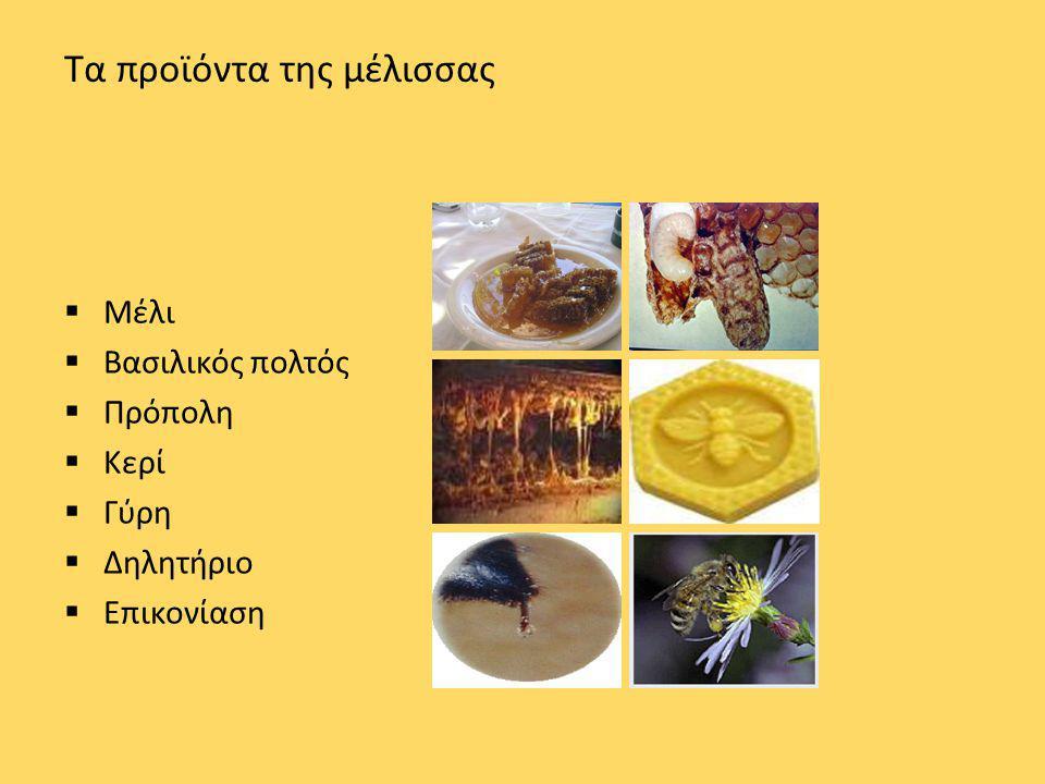 Τα προϊόντα της μέλισσας  Μέλι  Βασιλικός πολτός  Πρόπολη  Κερί  Γύρη  Δηλητήριο  Επικονίαση