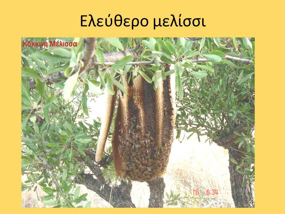 Το μέλι είναι η φυσική γλυκιά ουσία που παράγουν οι μέλισσες από το νέκταρ των φυτών, το οποίο συλλέγουν, μετατρέπουν αναμειγνύοντας με ειδικές ύλες του σώματός τους και το φυλάσσουν στις κερήθρες της κυψέλης.