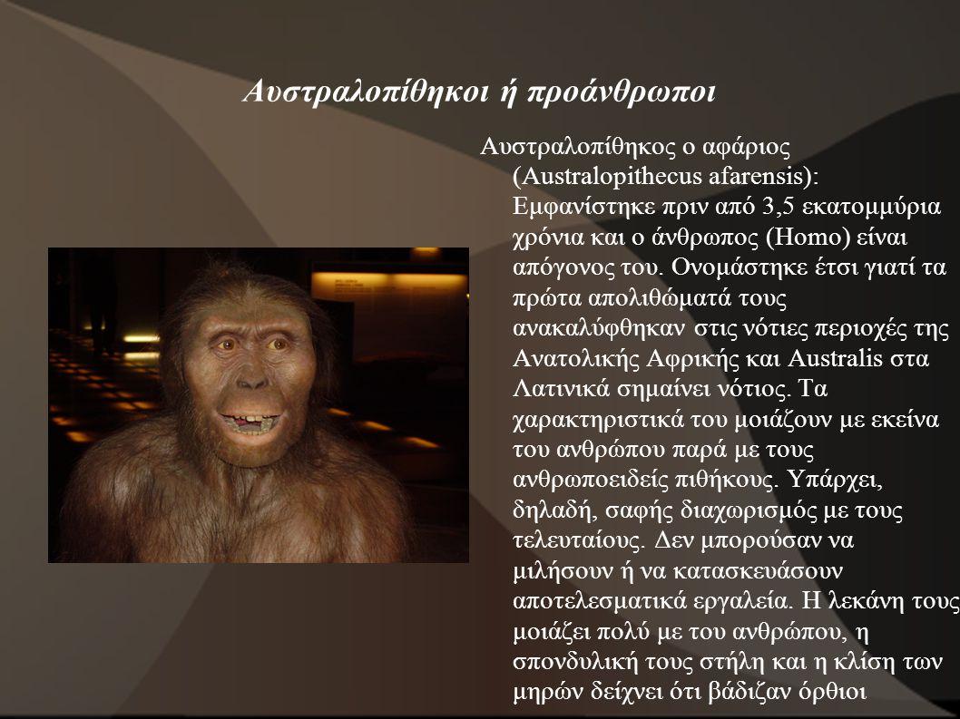 Αυστραλοπίθηκοι ή προάνθρωποι Αυστραλοπίθηκος ο αφάριος (Australopithecus afarensis): Εμφανίστηκε πριν από 3,5 εκατομμύρια χρόνια και ο άνθρωπος (Homo