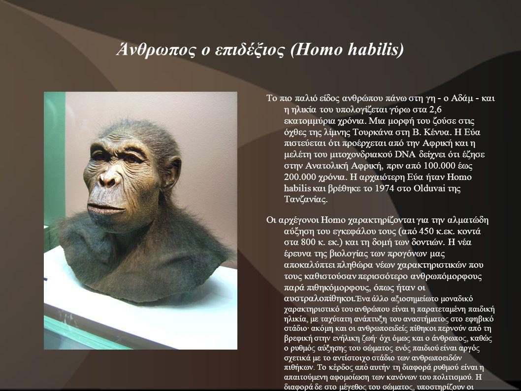 Άνθρωπος ο επιδέξιος (Homo habilis) Το πιο παλιό είδος ανθρώπου πάνω στη γη - ο Αδάμ - και η ηλικία του υπολογίζεται γύρω στα 2,6 εκατομμύρια χρόνια.
