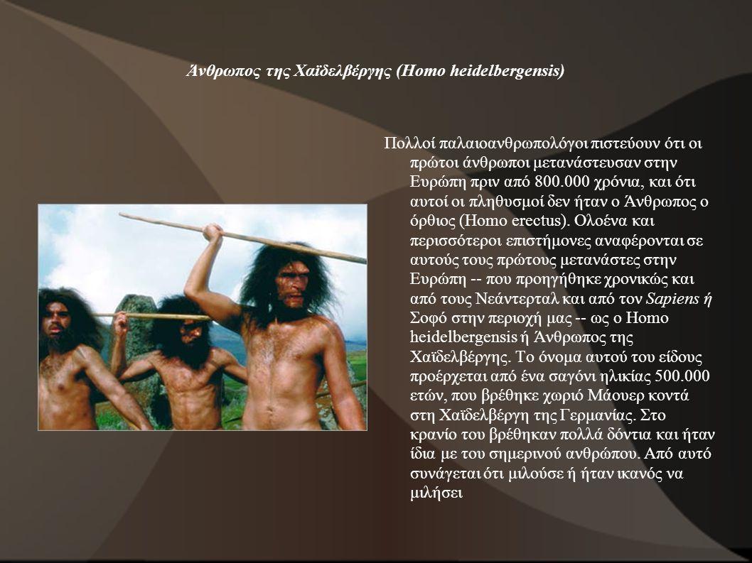 Άνθρωπος της Χαϊδελβέργης (Homo heidelbergensis) Πολλοί παλαιοανθρωπολόγοι πιστεύουν ότι οι πρώτοι άνθρωποι μετανάστευσαν στην Ευρώπη πριν από 800.000