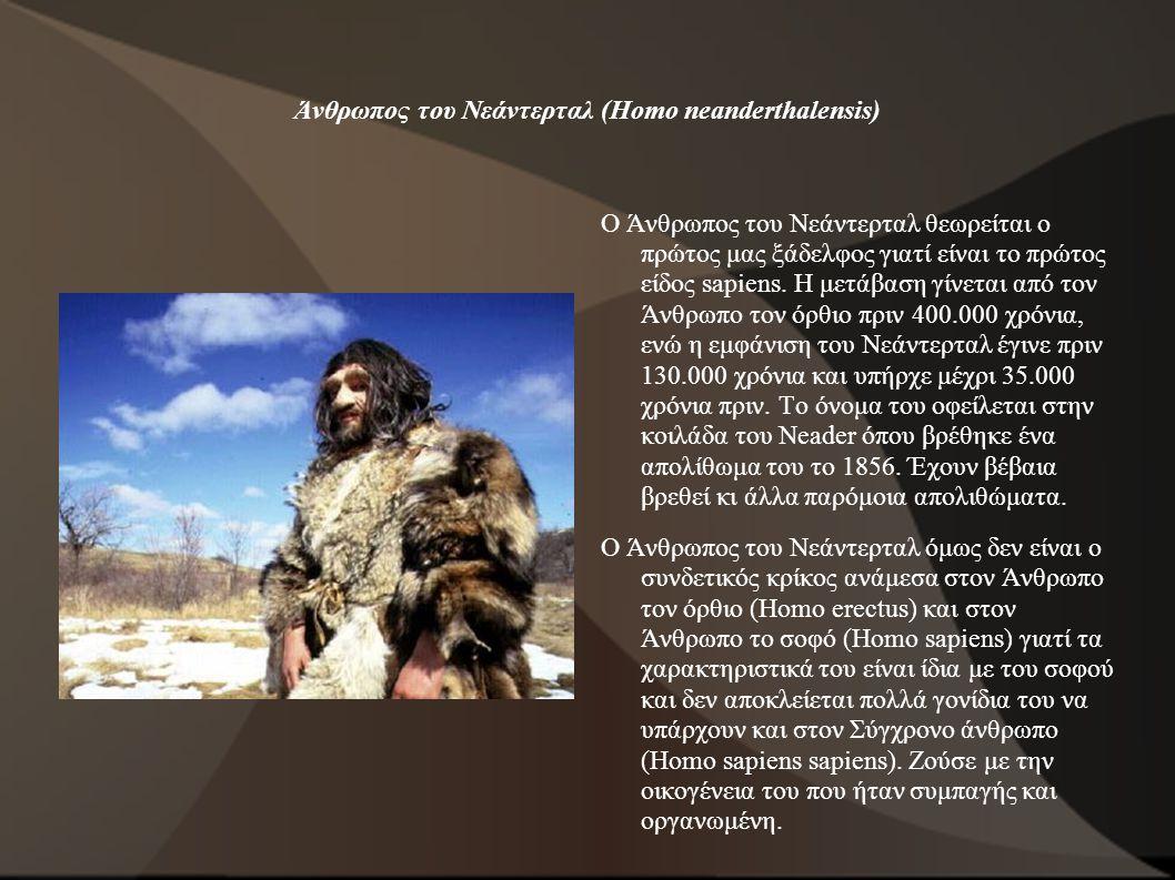 Άνθρωπος του Νεάντερταλ (Homo neanderthalensis) Ο Άνθρωπος του Νεάντερταλ θεωρείται ο πρώτος μας ξάδελφος γιατί είναι το πρώτος είδος sapiens. Η μετάβ
