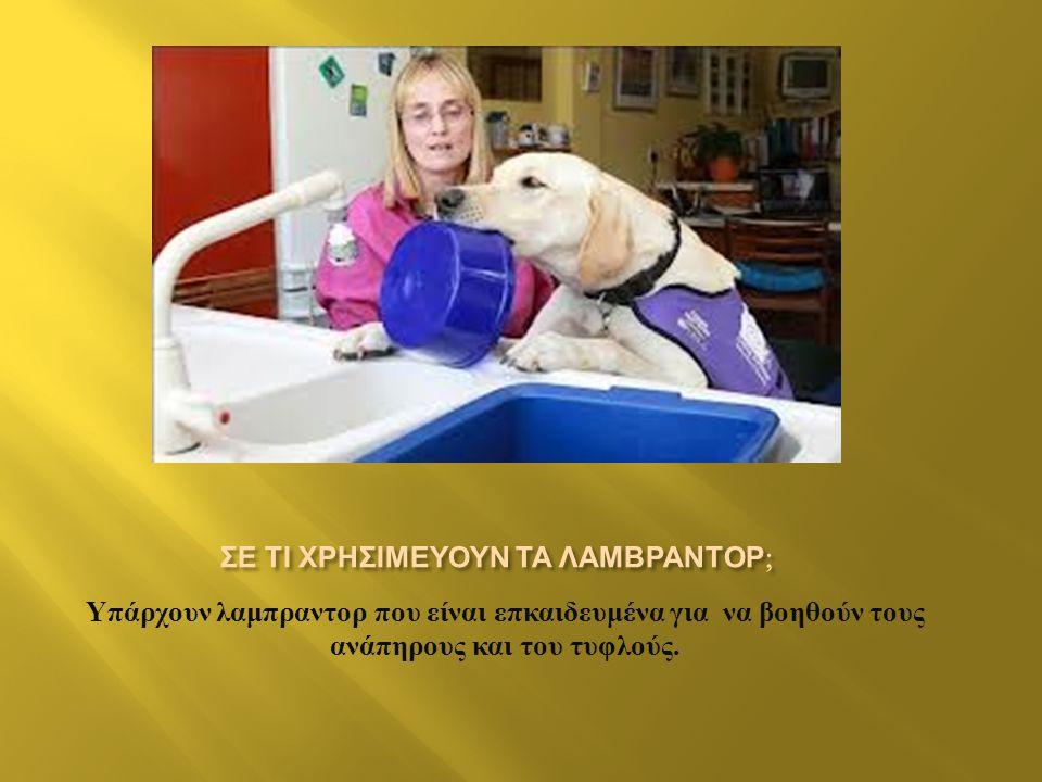 Υπάρχουν λαμπραντορ που είναι επκαιδευμένα για να βοηθούν τους ανάπηρους και του τυφλούς.
