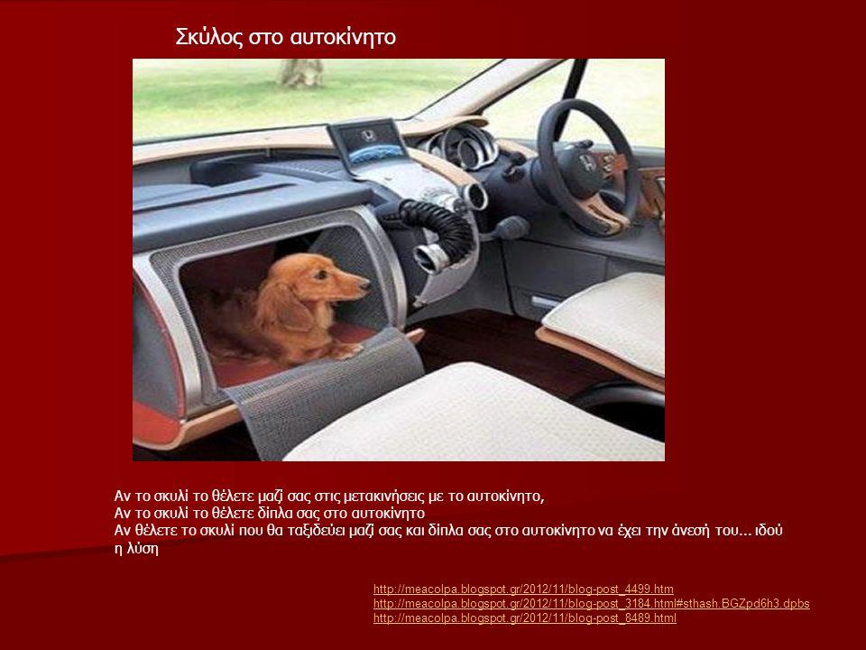 Σκύλος στο αυτοκίνητο http://meacolpa.blogspot.gr/2012/11/blog-post_4499.htm http://meacolpa.blogspot.gr/2012/11/blog-post_3184.html#sthash.BGZpd6h3.d