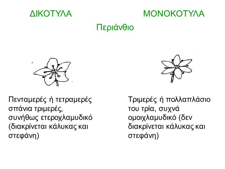 Περιάνθιο σε δύο κύκλους Το μεσαίο πέταλο του εσωτερικού κύκλου (γλωσσάριο) μεγαλύτερο γλωσσάριο Τάξη Orchidales – Οικογένεια Orchidaceae