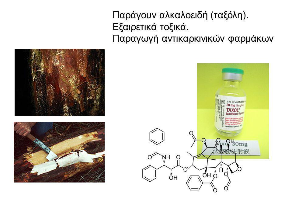 Παράγουν αλκαλοειδή (ταξόλη). Εξαιρετικά τοξικά. Παραγωγή αντικαρκινικών φαρμάκων