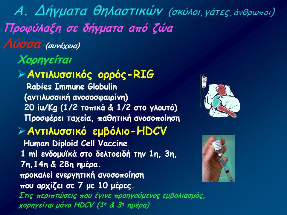 Προφύλαξη σε δήγματα από ζώα Λύσσα (συνέχεια) Χορηγείται  Αντιλυσσικός ορρός-RIG Rabies Immune Globulin (αντιλυσσική ανοσοσφαιρίνη) 20 iu/Kg (1/2 τοπ